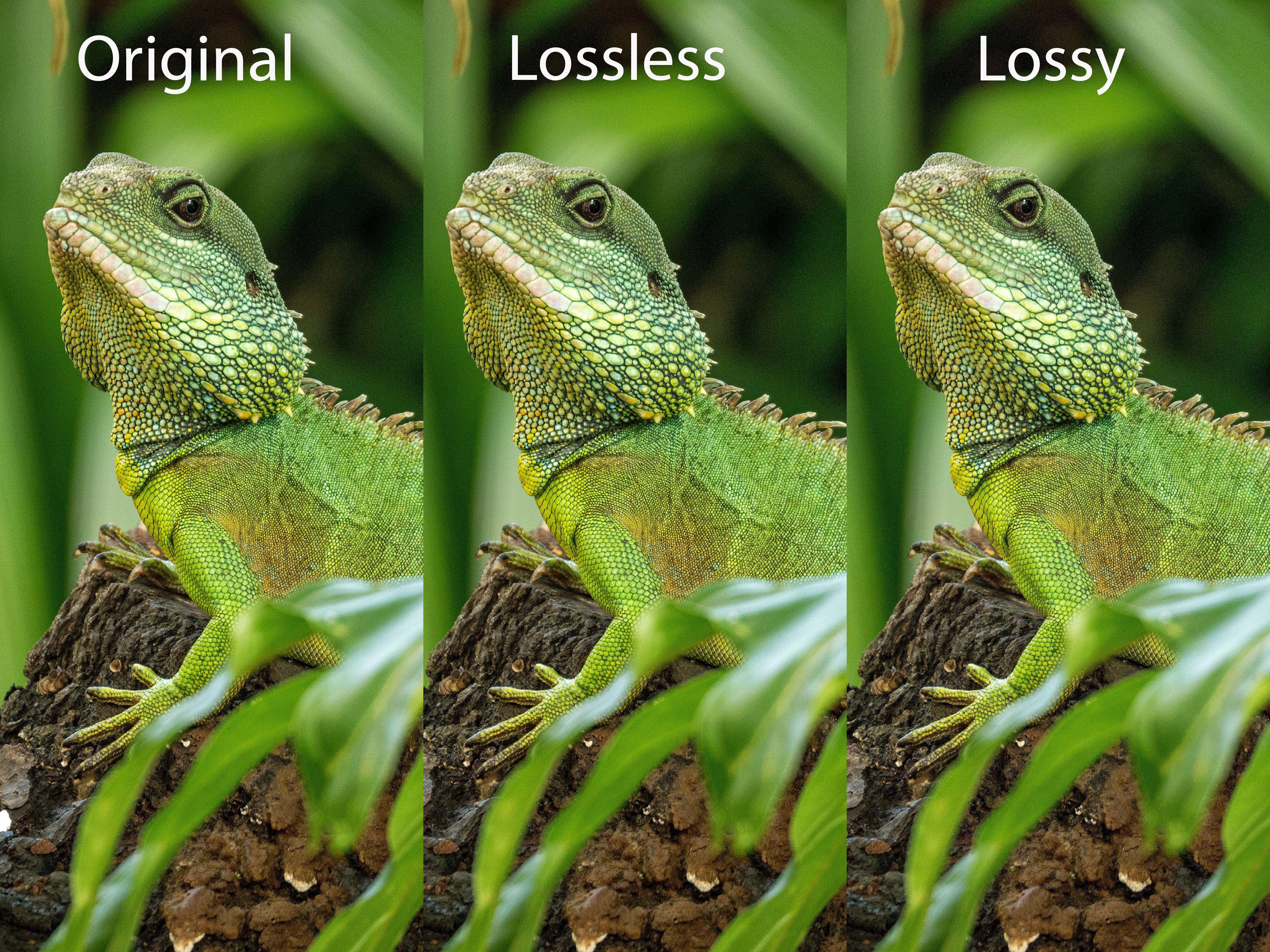 JPEG image size reduction with ShortPixel - My Blog